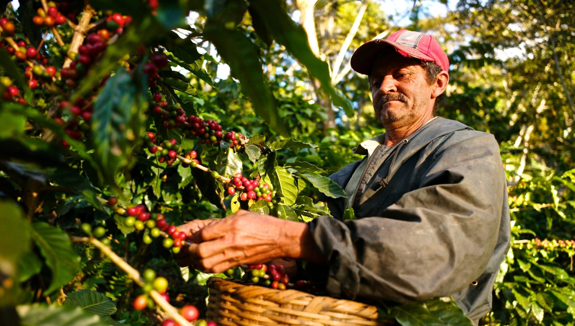 All About Kona Coffees