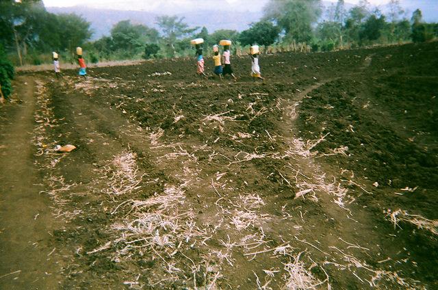 coffee farmers in Uganda fetching water