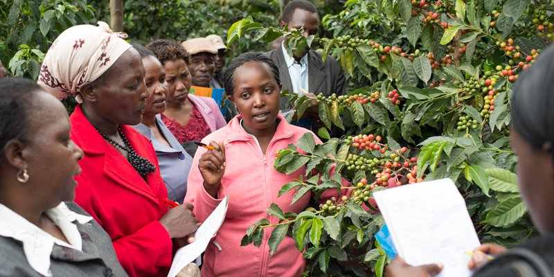 educating Kenyan women in the coffee supply chain